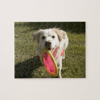 A dog with a frisbee puzzle