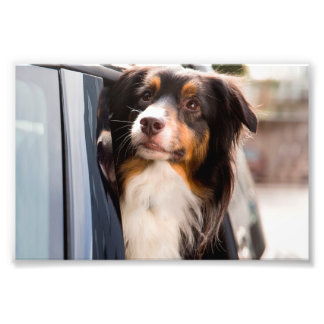 A Dog With Her Head Out of a Car Window Art Photo
