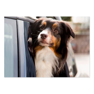 A Dog With Her Head Out of a Car Window Pack Of Chubby Business Cards