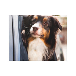 A Dog With Her Head Out of a Car Window Stretched Canvas Print