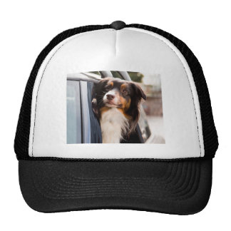 A Dog With Her Head Out of a Car Window Cap