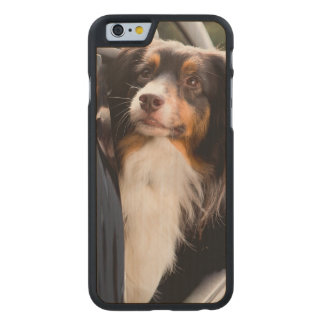 A Dog With Her Head Out of a Car Window Carved® Maple iPhone 6 Slim Case