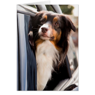 A Dog With Her Head Out of a Car Window Note Card
