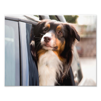 A Dog With Her Head Out of a Car Window Photo