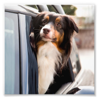 A Dog With Her Head Out of a Car Window Photographic Print