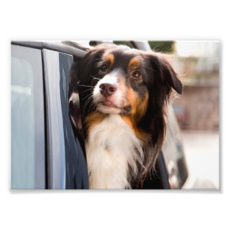 A Dog With Her Head Out of a Car Window Photograph