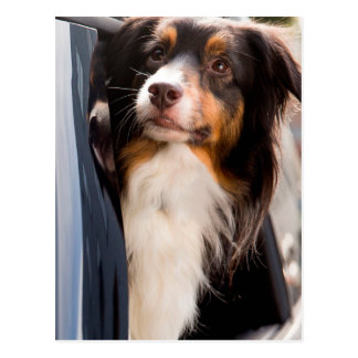 A Dog With Her Head Out of a Car Window Postcard