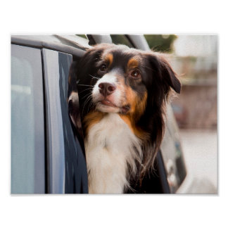 A Dog With Her Head Out of a Car Window Poster
