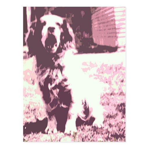 A Dogs Life Postcard