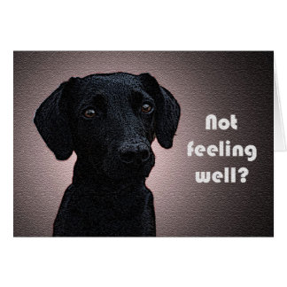 A Dog's Remedy Get Well Card