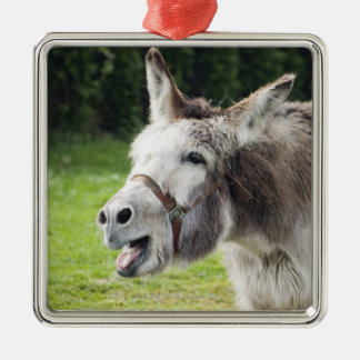 A donkey christmas ornament