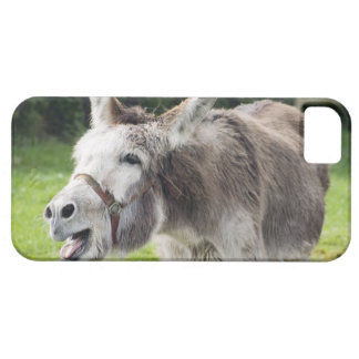 A donkey iPhone 5 cover