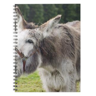 A donkey notebook