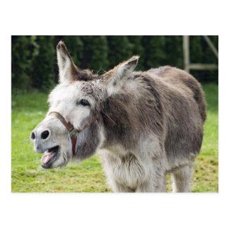A donkey postcard