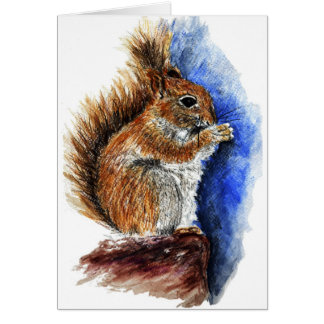 A Douglas Squirrel watercolor pencil Cards