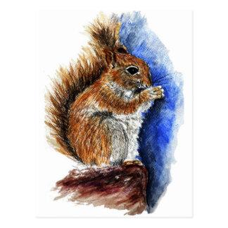 A Douglas Squirrel watercolor pencil Post Card