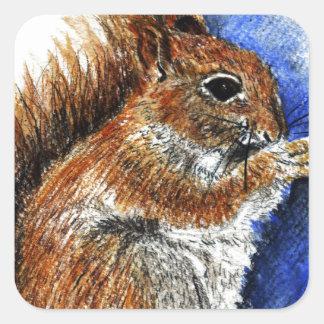 A Douglas Squirrel, watercolor pencil Square Sticker