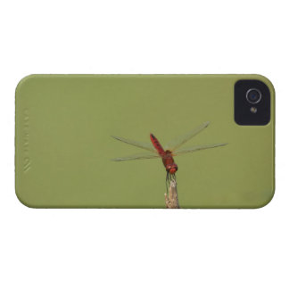 A Dragonfly rests momentarily on a dried weed Case-Mate iPhone 4 Cases