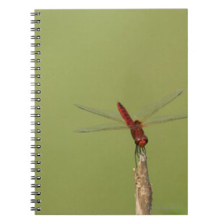 A Dragonfly rests momentarily on a dried weed Notebook