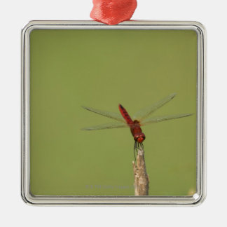 A Dragonfly rests momentarily on a dried weed Silver-Colored Square Decoration