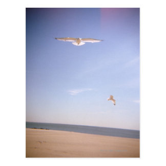 a dreamy image of seagulls flying at the beach postcard