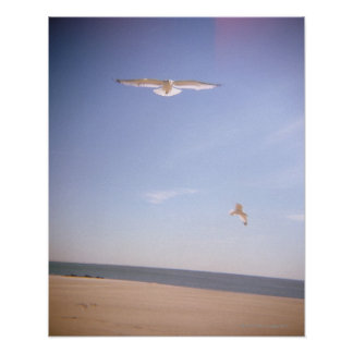 a dreamy image of seagulls flying at the beach poster