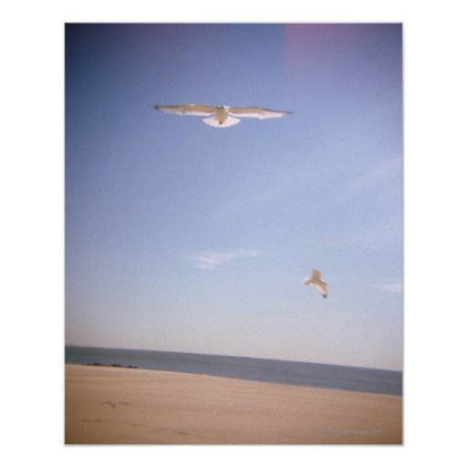 a dreamy image of seagulls flying at the beach print