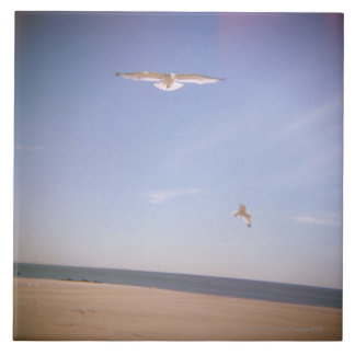a dreamy image of seagulls flying at the beach tile