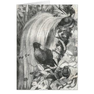 A. E. Brehm - Birds of Paradise Card