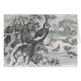A. E. Brehm - Cockatiels Card