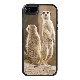 A Family Of Meerkats: Father, Mother And Baby OtterBox iPhone 5/5s/SE Case