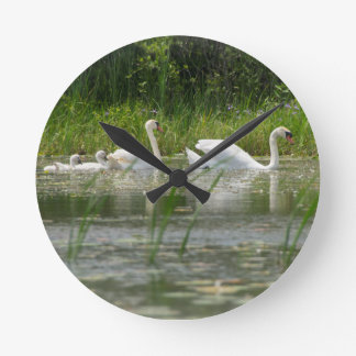 A family of swans swims in Thunder Bay River, Mich Round Clock