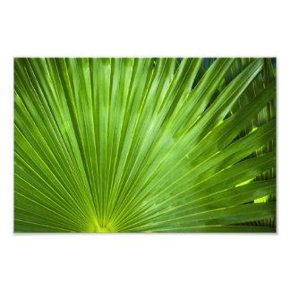 A Fan of Green Photo Print
