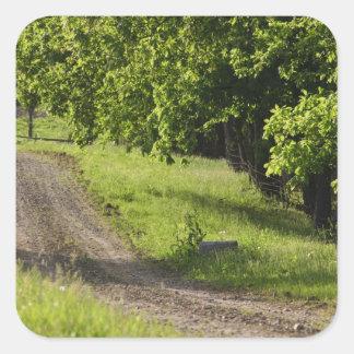 A farm road in Ipswich, Massachusetts. Square Sticker