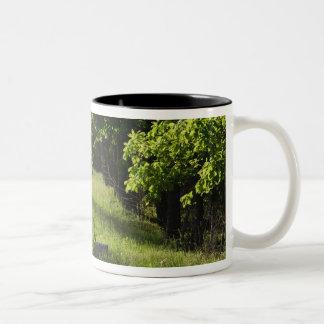 A farm road in Ipswich, Massachusetts. Two-Tone Coffee Mug