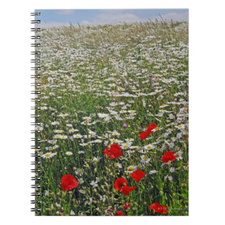 A farmland field of white ox-eyed daisies and notebooks
