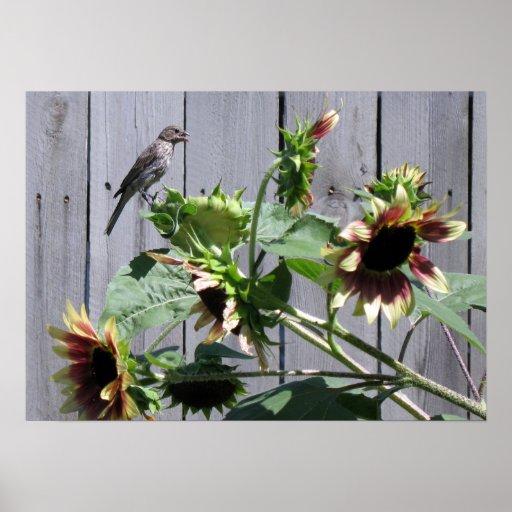 A Feast of Sunflower Seeds Poster
