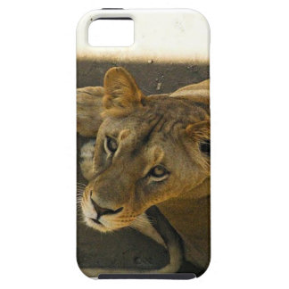 A Female Lion iPhone 5 Cover