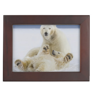 A female polar bear and her cub play in the snow keepsake box