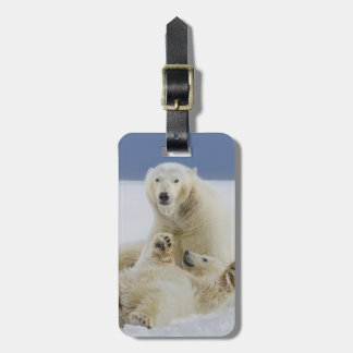 A female polar bear and her cub play in the snow luggage tag