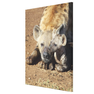 A female Spotted Hyena and her cub, Kruger Canvas Print
