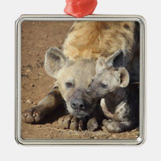 A female Spotted Hyena and her cub, Kruger Christmas Ornament