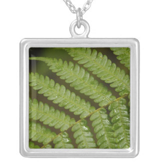 A fern detail, from Mindo Cloud Forest, Silver Plated Necklace