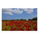 A Field Full Of Red Flowers Poster