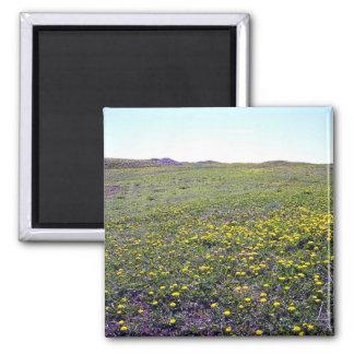 A Field Of Dandelions Magnet