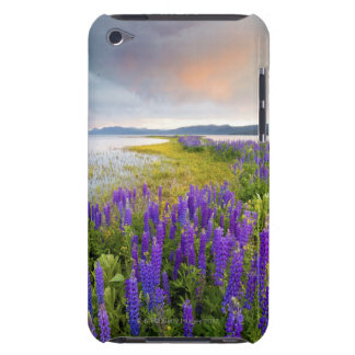 A field of Lupine wildflowers on the North Shore Barely There iPod Cover