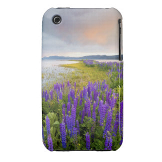 A field of Lupine wildflowers on the North Shore iPhone 3 Cases