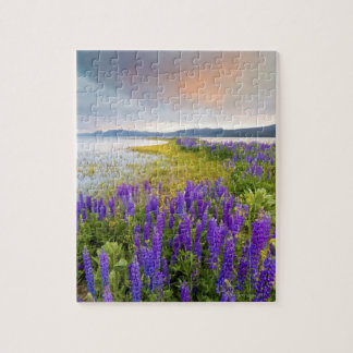 A field of Lupine wildflowers on the North Shore Jigsaw Puzzle