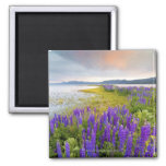 A field of Lupine wildflowers on the North Shore Refrigerator Magnet