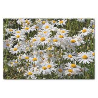 A Field of Oxeye Daisies Tissue Paper